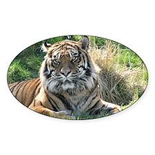 TigerWA Shoulder Decal