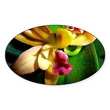 Phalaenopsis Decal