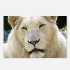 blonde lion note Postcards (Package of 8)