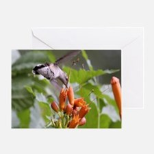 Hummingbird mousepad Greeting Card
