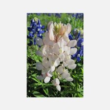 Pink and Bluebonnets Rectangle Magnet