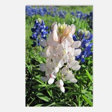 Pink and Bluebonnets Postcards (Package of 8)