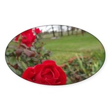 Red Roses in Park Decal