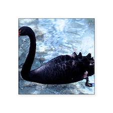 "Black Swan Square Sticker 3"" x 3"""