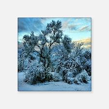 "mesquite tree snow Square Sticker 3"" x 3"""