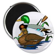 mallard ducks Magnet