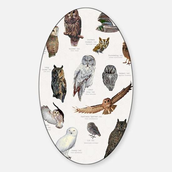 OwlSpecies11x17 Sticker (Oval)