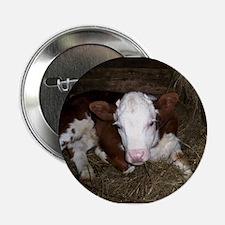 Baby calf Button