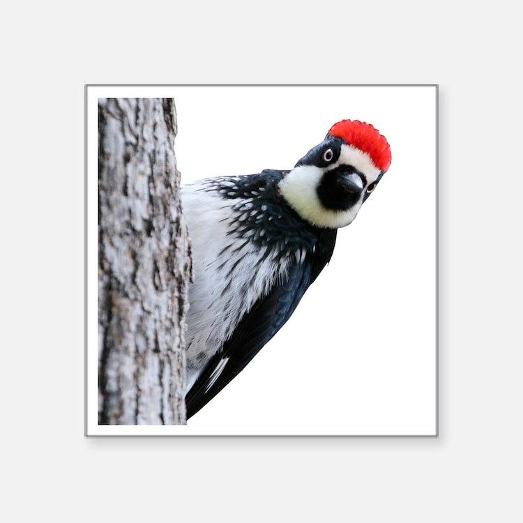 """Acorn Woodpecker Bird T-Shi Square Sticker 3"""" x 3"""""""
