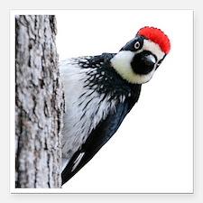 "Acorn Woodpecker Bird T- Square Car Magnet 3"" x 3"""