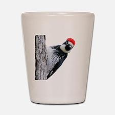 Acorn Woodpecker Bird T-Shirt Shot Glass
