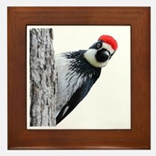 Acorn Woodpecker Bird T-Shirt Framed Tile