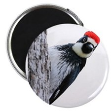 Acorn Woodpecker Bird T-Shirt Magnet