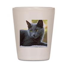 Gray Cat Shot Glass