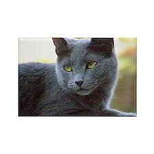 Gray Cat Rectangle Magnet