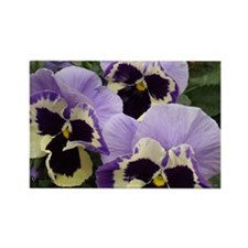 Multi colored Pansies Rectangle Magnet
