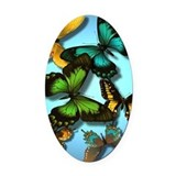 Butterfly Oval Car Magnets