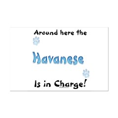 Havanese Charge Posters