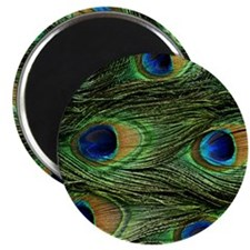 peacock wallet Magnet