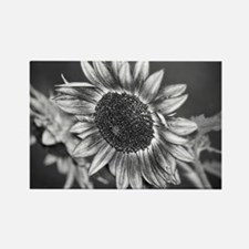 Black and White Sunflower Rectangle Magnet