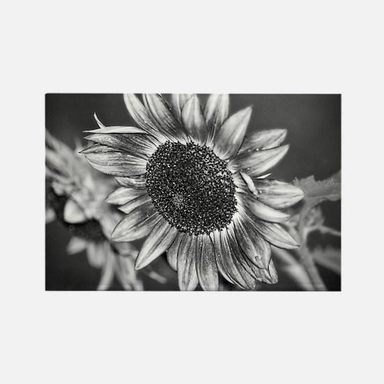 Black and White Sunflower Rectangle Magnet