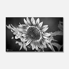 Black and White Sunflower Car Magnet 20 x 12