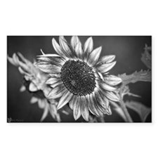 Black and White Sunflower Decal