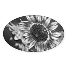 Black and White Sunflower8x10 Decal