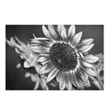 Black and White Sunflower Postcards (Package of 8)