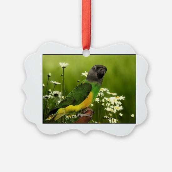 chiwi Ornament