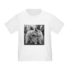 Cairn Terrier T