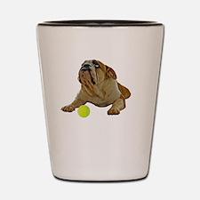 FIN-bulldog-lying-life-WonB Shot Glass