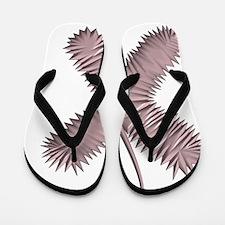 X - (LUPINELESS FONT) Flip Flops
