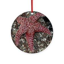 EGSeaStarSquareFB Round Ornament