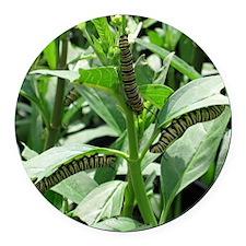 Caterpillars Round Car Magnet