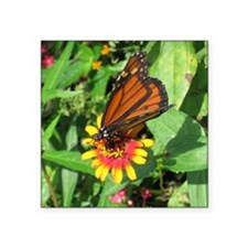 "Monarch Butterfly2 Square Sticker 3"" x 3"""