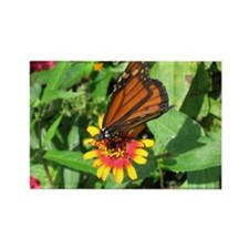 Monarch Butterfly2 Rectangle Magnet