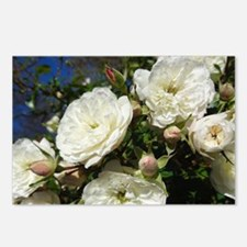 White Roses In Blue Sky Postcards (Package of 8)