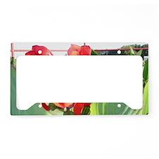 Canna Lily Sun Bath License Plate Holder