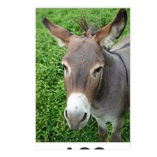 Mule with Text Postcards (Package of 8)
