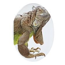 Iguana_logo_XLarge_trimmed Oval Ornament