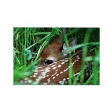 Fawn Rectangle Magnet