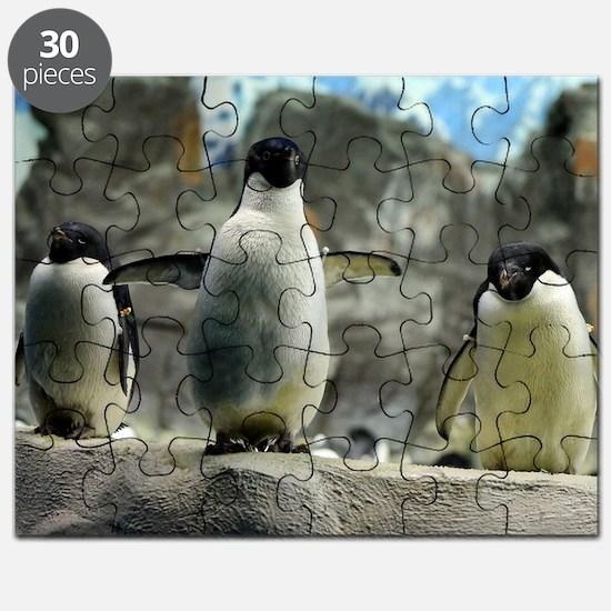 Adelie Penguins Puzzle