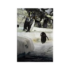 Antarctic Penguins Rectangle Magnet