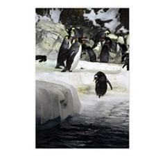 Antarctic Penguins Postcards (Package of 8)