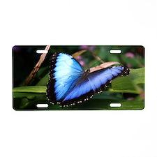 Blue Morpho Butterfly 2 Aluminum License Plate