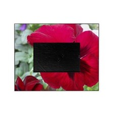 Perfect Red Pansy Flower Picture Frame