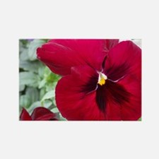 Perfect Red Pansy Flower Rectangle Magnet