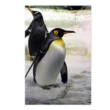 King Penguin 7 Postcards (Package of 8)