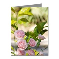 journal Note Cards (Pk of 20)